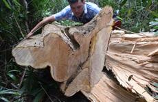 Còn phá rừng, còn thảm họa thiên tai: Rừng tự nhiên không ngừng 'chảy máu'