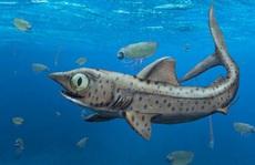 'Vua thủy quái' 365 triệu tuổi: Loài chưa từng thấy trên thế giới