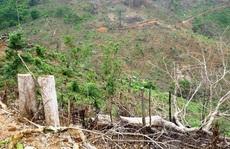 Còn phá rừng, còn thảm họa thiên tai: Phá hàng chục ha rừng trong vài tháng