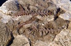 Kinh ngạc hóa thạch sinh vật 'biến hình' dở dang thành quái thú bay