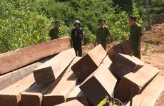 Khởi tố nguyên giám đốc công ty lâm nghiệp 'bất lực' để rừng bị tàn phá