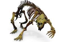 Hãi hùng 'con thú điên' nguyên vẹn 66 triệu tuổi, sống giữa khủng long