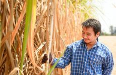 Những giải pháp phòng vệ thiết thực cho ngành mía đường