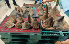 Phát hiện lượng mẫu vật lớn nhất từ trước đến nay ở Tân Sơn Nhất, nghi là hàng cấm