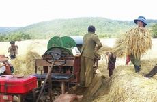Bảo hộ chỉ dẫn địa lý 'Mang Yang' cho gạo Ba Chăm, Gia Lai