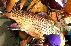 Vụ đưa cá hô lên TP HCM xẻ thịt: Có thể bị phạt 1 tỉ đồng