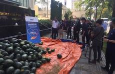 Một tập đoàn mua 20 tấn dưa hấu hỗ trợ nông dân Tây Nguyên