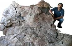 Choáng váng 'thủy quái bọc thép' 10 triệu tuổi xuất hiện giữa sa mạc