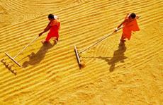 Cuộc thi ảnh 'Nét đẹp lao động': Hành trình cây lúa Miền Tây