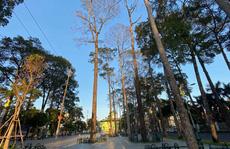 Nhiều cây xanh lặng lẽ 'lìa đời'