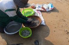 Trúng đậm mùa ốc gạo