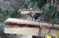 Vụ đoàn lâm tặc rầm rộ đưa gỗ ra khỏi rừng: Tiếp tục bắt 13 xe chở gỗ lậu