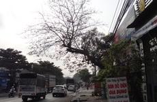 Mối nguy cây đổ