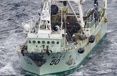 5 thuyền viên người Việt mất tích trong vụ chìm tàu ngoài khơi Nhật Bản