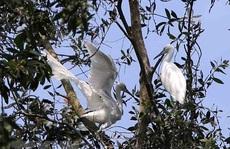 Phê duyệt phương án quản lý Khu bảo vệ cảnh quan rừng tràm Trà Sư