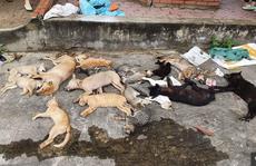 Nhóm đối tượng gây ra hơn 100 vụ trộm chó với thủ đoạn tàn độc