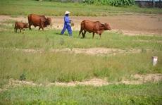 'Bất động sản nông nghiệp gần như... bất động'