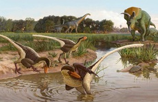'Quái vật' ăn thịt nửa vịt, nửa thằn lằn hiện ra trong mộ đá 67 triệu năm