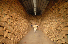 Doanh nghiệp xuất khẩu gạo vẫn ấm ức