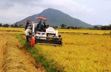 Nông dân miền Trung trúng mùa lúa