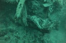 Mộ phần của 300 quái vật cổ đại chứa 'thần dược' cho con người