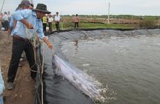 Doanh nghiệp xuất khẩu thủy sản than khổ vì chính sách hỗ trợ không đồng đều