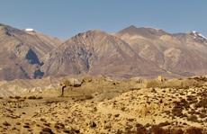Sự sống khắc nghiệt nơi tận cùng dãy Himalaya