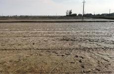 Đang gieo lúa, người phụ nữ bị điện cao thế giật tử vong