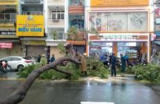 CLIP: Gió giật mạnh 'bứng' 2 cây xanh trên đường Võ Văn Tần - TP HCM