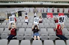Búp bê tình dục dự khán khiến CLB của Hàn Quốc bị phạt nặng