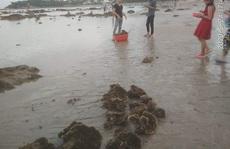 Lên án hành vi hủy hoại san hô vịnh Nha Trang