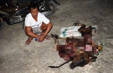 Quảng Bình: Túng tiền, thanh niên sang nhà hàng xóm bắt trộm bò xẻ thịt đem bán
