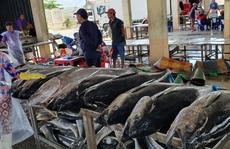 Khai thác hải sản dần phục hồi