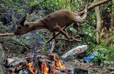 Tổng Biên tập Tạp chí Sông Hương lên tiếng việc bị 'gán tội' giết thịt động vật quý hiếm