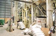 Doanh nghiệp 'xù' hợp đồng gạo dự trữ quốc gia tiếp tục đi đấu thầu
