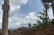 Hàng loạt chủ rừng kê khai tăng diện tích, chiếm đoạt tiền tỉ
