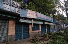 Cây xanh trên đường Tô Hiến Thành tét nhánh đè chết người