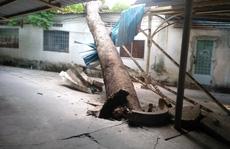 Cây xanh ngã đổ trong đêm