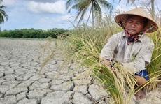 Nhiều giải pháp cứu cây trồng vùng hạn mặn