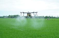 Nông dân xứ Quảng lần đầu thấy phun thuốc bằng thiết bị bay