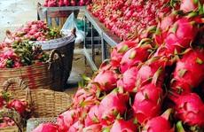 """Hết """"một mình một chợ"""", thanh long Việt Nam cần cạnh tranh """"sòng phẳng"""" tại Trung Quốc"""