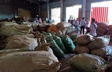 Đà Nẵng: Hơn 103 tấn dược liệu từ Trung Quốc 'đội lốt' củ quả sấy khô cập cảng Tiên Sa
