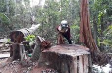 Để mất 103m3 gỗ, phần lớn lãnh đạo địa phương, kiểm lâm chỉ nhận kiểm điểm