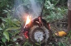 Bị ong đốt khi ra vườn chơi, em chết, anh nguy kịch.