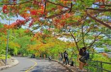 Giới trẻ Sài Gòn truyền tai nhau trải nghiệm 'con đường mùa hè' đẹp nhất thành phố biển Vũng Tàu