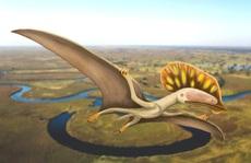 Phát hiện 'quái điểu' chưa từng thấy mang dòng máu khủng long