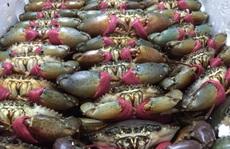 Xuất khẩu cua ghẹ sang Trung Quốc tăng đột biến bất chấp đại dịch Covid-19