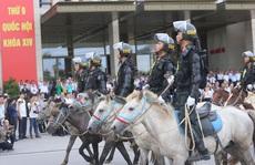 Đoàn Cảnh sát cơ động Kỵ binh: Giống ngựa kỵ binh sức khoẻ tốt, ngoại hình phù hợp