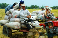 Vị thế gạo Việt