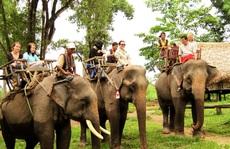 Cần chấm dứt việc dùng voi làm du lịch